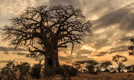 Reflections on youth ministry in South Africa #1